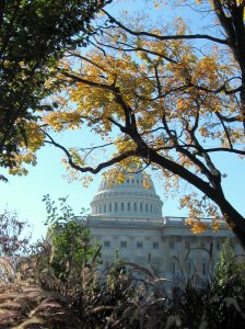 A Fine October Day At the Capitol/Photo by A. Ault